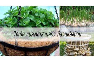 ไอเดีย แปลงผักสวนครัว ที่สวนหลังบ้าน