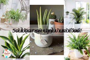5ต้นไม้ดูดสารพิษปลูกในบ้านแล้วชีวิตดี!
